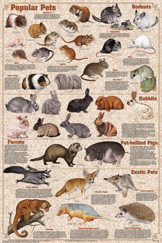 Popular Pets Poster. Cats Of The World Poster