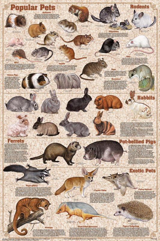 PopularPetsPosterjpg – Pet Poster